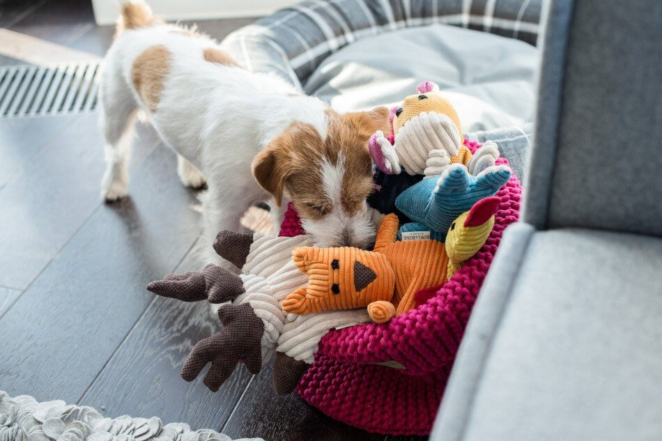 basket for dog toy cotton pink toy toffi felix roy duckie bax bowlandbonerepublic ps2sa