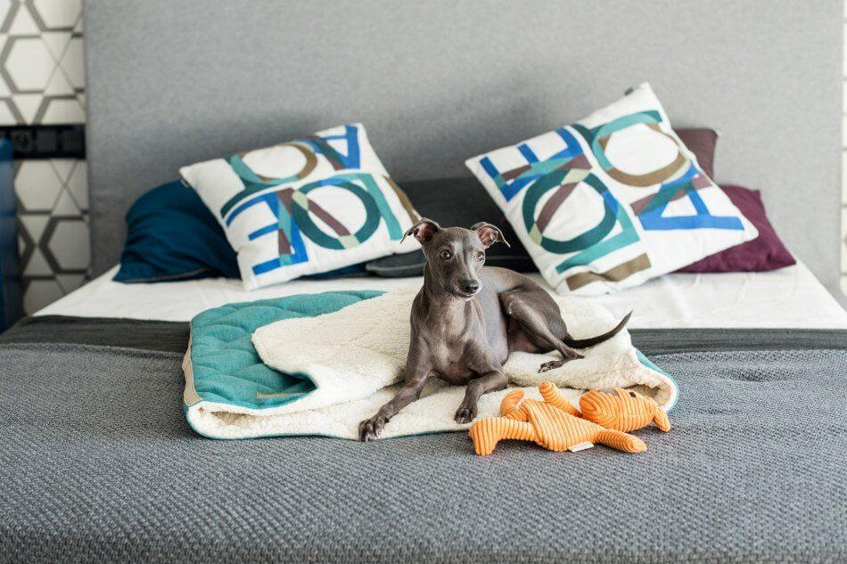 dog bed dreamy mint green toy felix bowlandbonerepublic ls1sa
