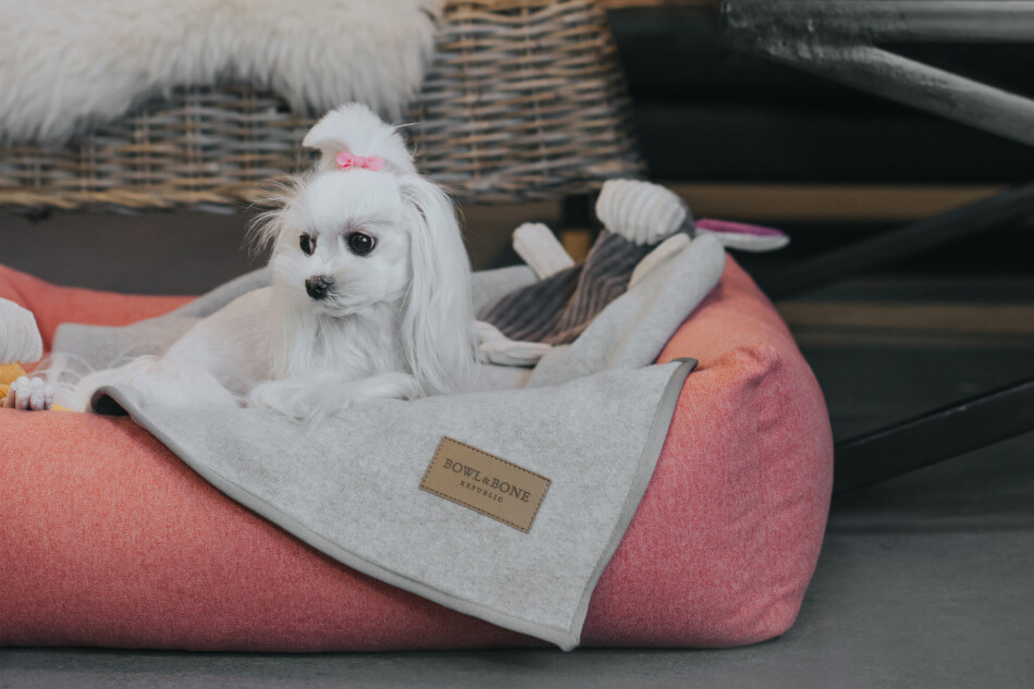 dog bed loft coral blanket zen grey toy dex bowl and bone republi ls2sa