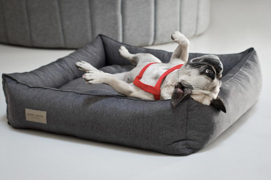 dog bed urban graphite harness active red bowl and bone republic ls1sa