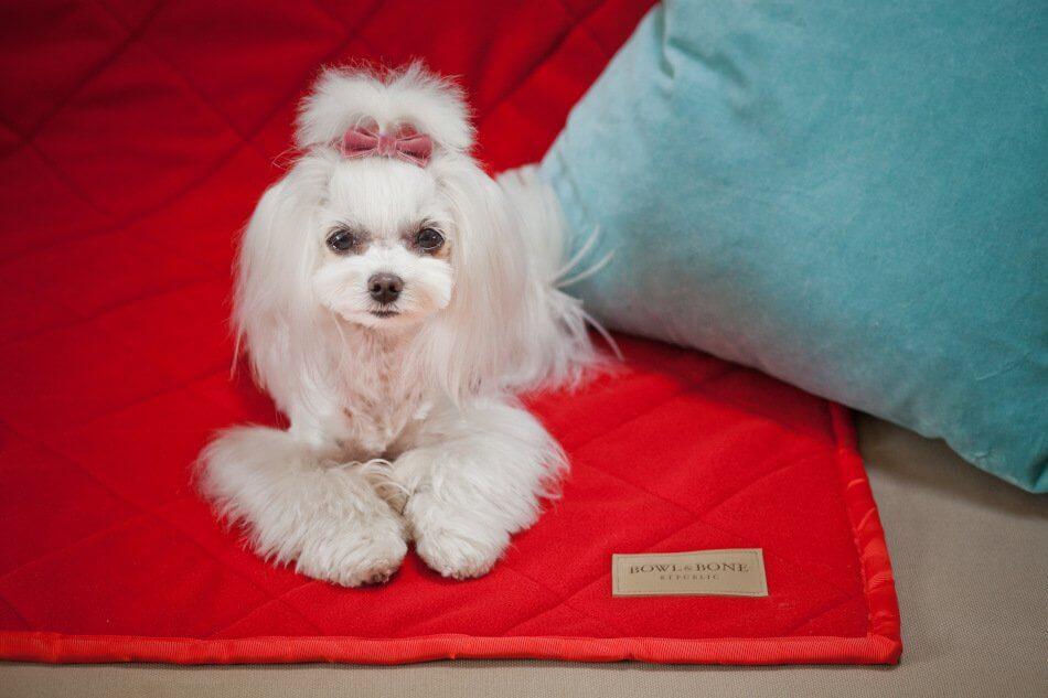 dog blanket royal red blue bowlandbonerepublic ls1sa