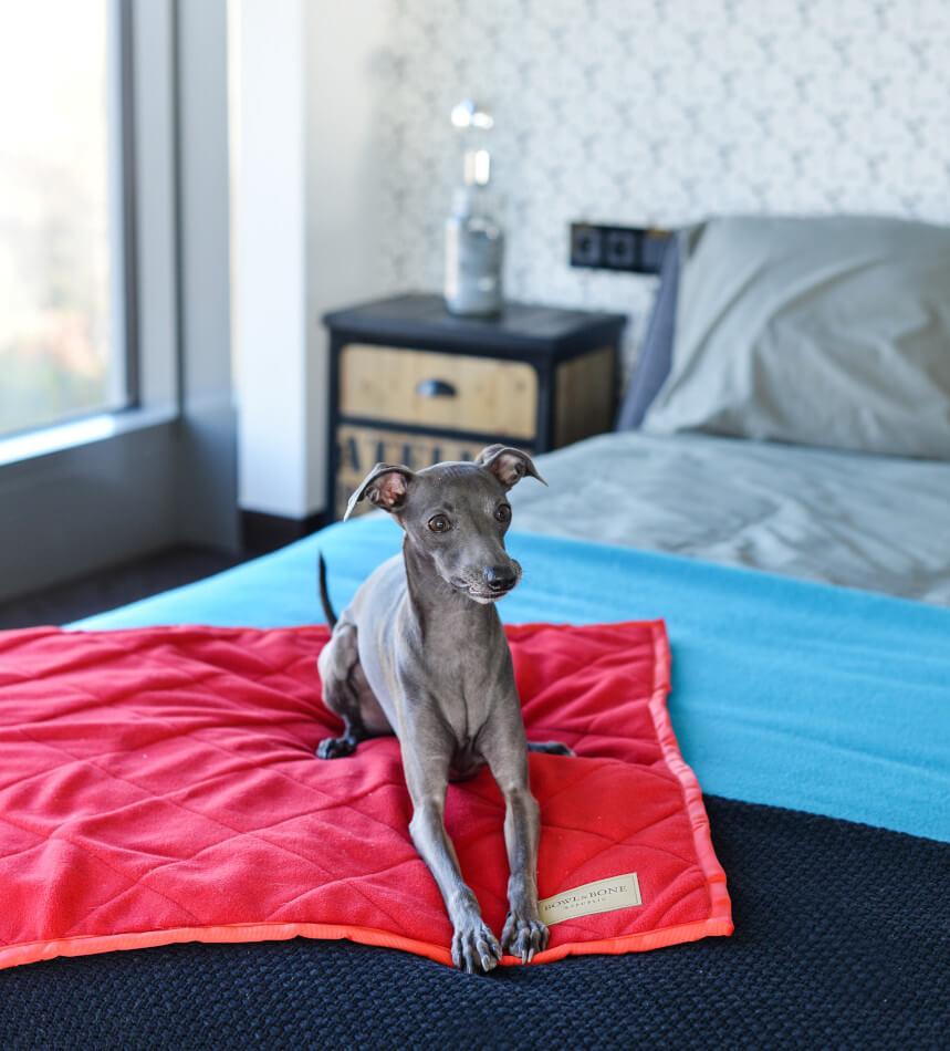 dog blanket royal red blue bowlandbonerepublic ls2sa