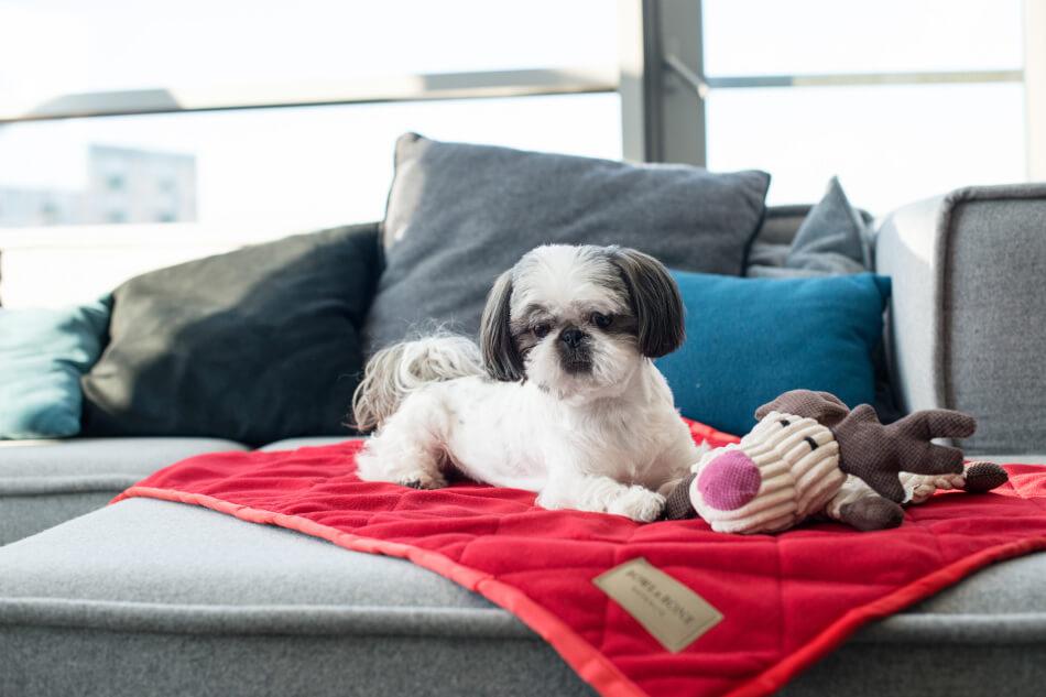 dog blanket royal red blue toy toffi bowl and bone republic ls1sa