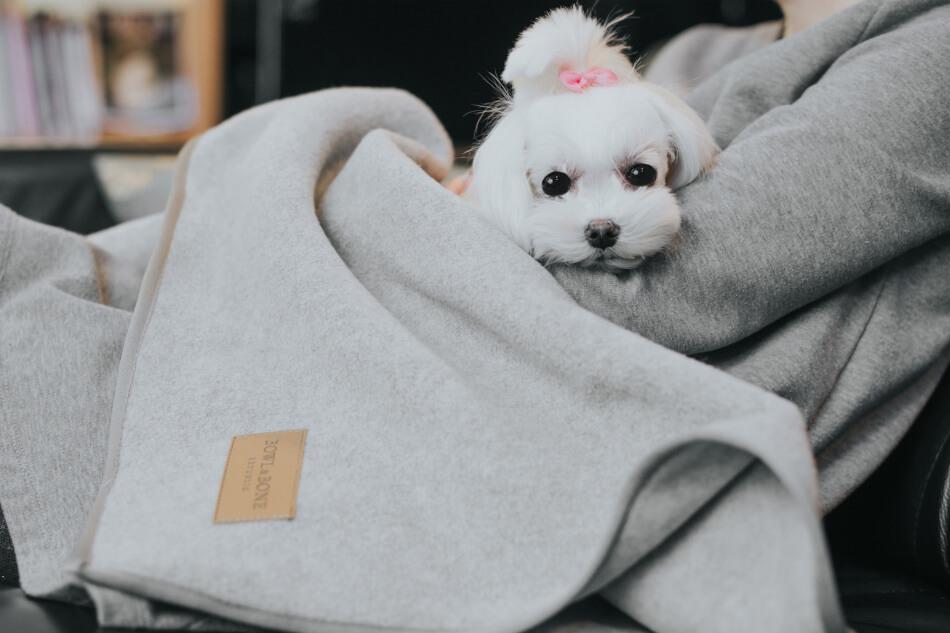 dog blanket zen grey bowl and bone republic ls1sabowlandbonerepublic