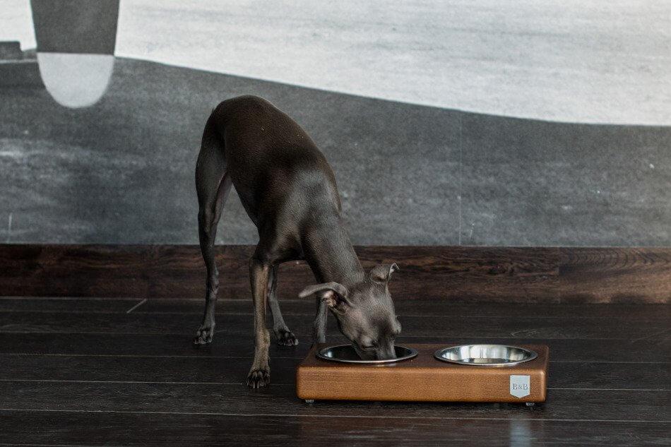 dog bowl duo amber light brown wooden bowlandbonerepublic ls2sa
