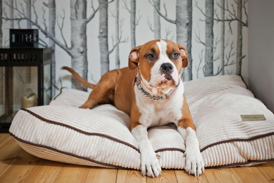 dog cushion bed deco amber white bowlandbonerepublic ls2sa