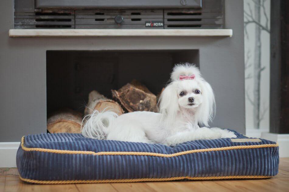 dog cushion bed deco sapphire blue bowlandbonerepublic ls1sa