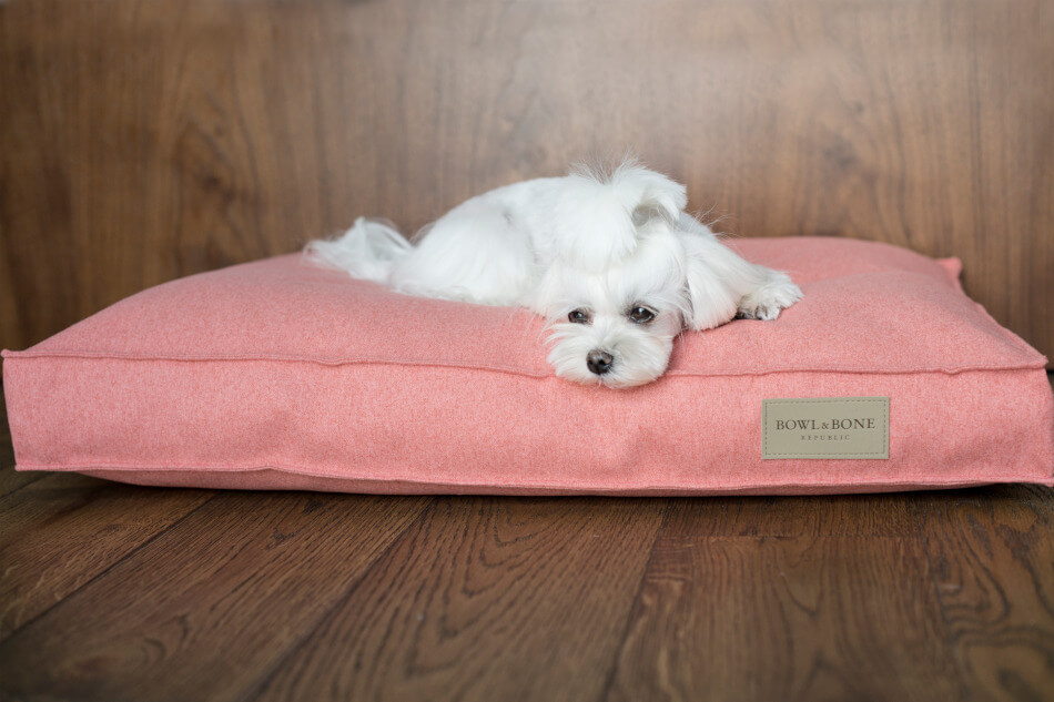 dog cushion bed loft coral bowl and bone republic ls1sa