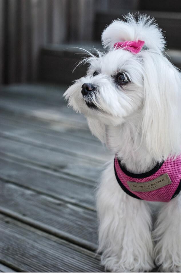dog harness candy pink bowlandbonerepublic ls1sa