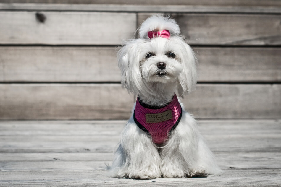 dog harness candy pink bowlandbonerepublic ls2sa