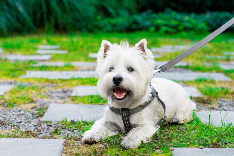 dog harness lead active grey bowl and bone republic ls1sa