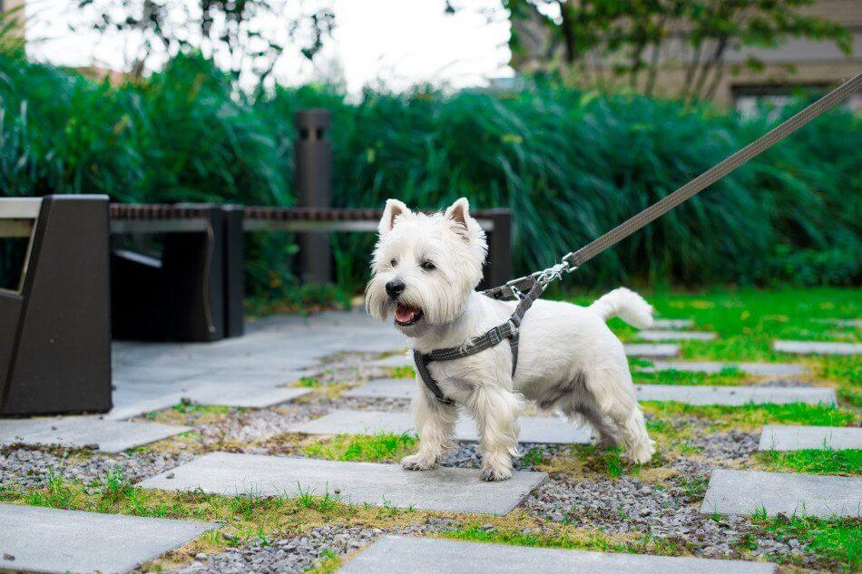 dog harness lead active grey bowlandbonerepublic ls2sa
