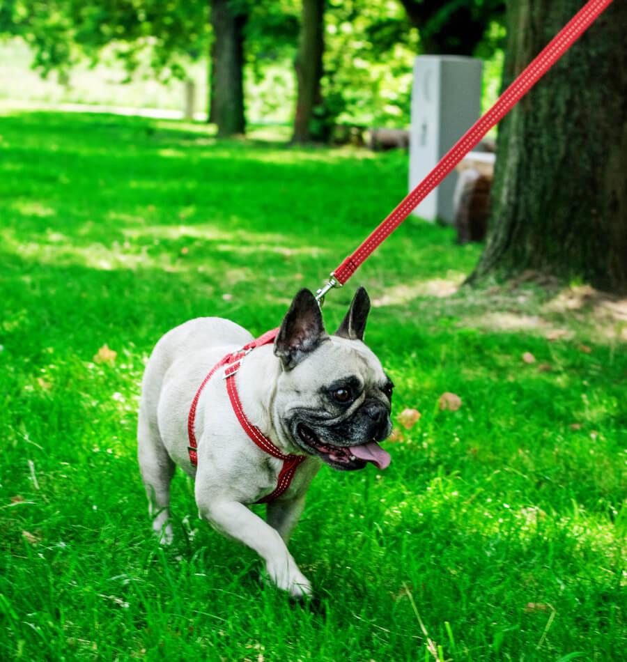 dog harness lead active red bowlandbonerepublic ls2sa