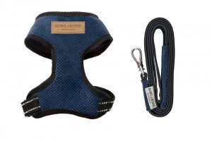 dog harness lead candy blue bowl and bone republic ps1sa