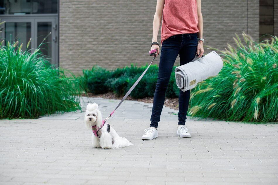 dog harness lead candy pink mat loft grey bowlandbonerepublic ps1sa