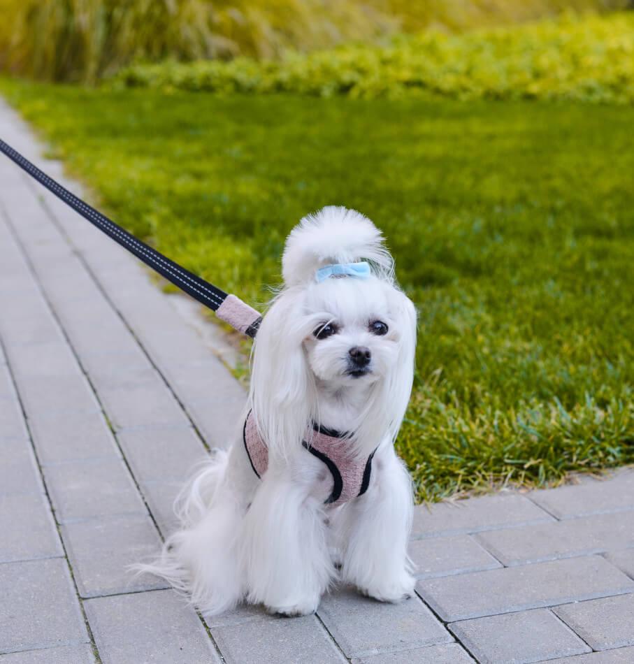 dog harness lead soho rose bowl and bone republic ls1sa
