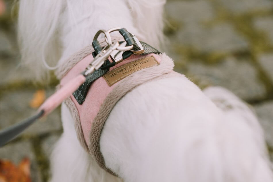 dog harness lead yeti rose bowl and bone republic ls2sa