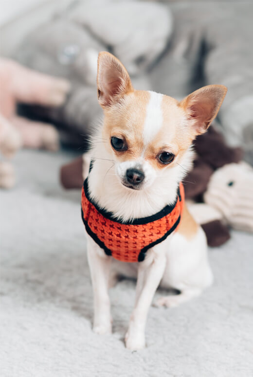 dog harness soho orange bowl and bone republic ls1sa