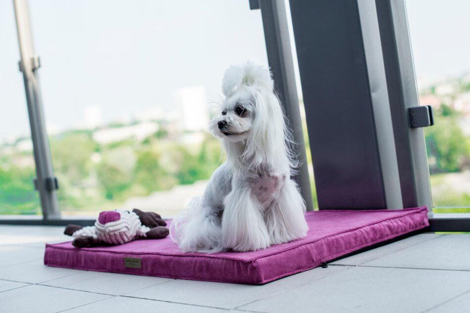 dog mat chill rose toy toffi bowl and bone republic ls1sa