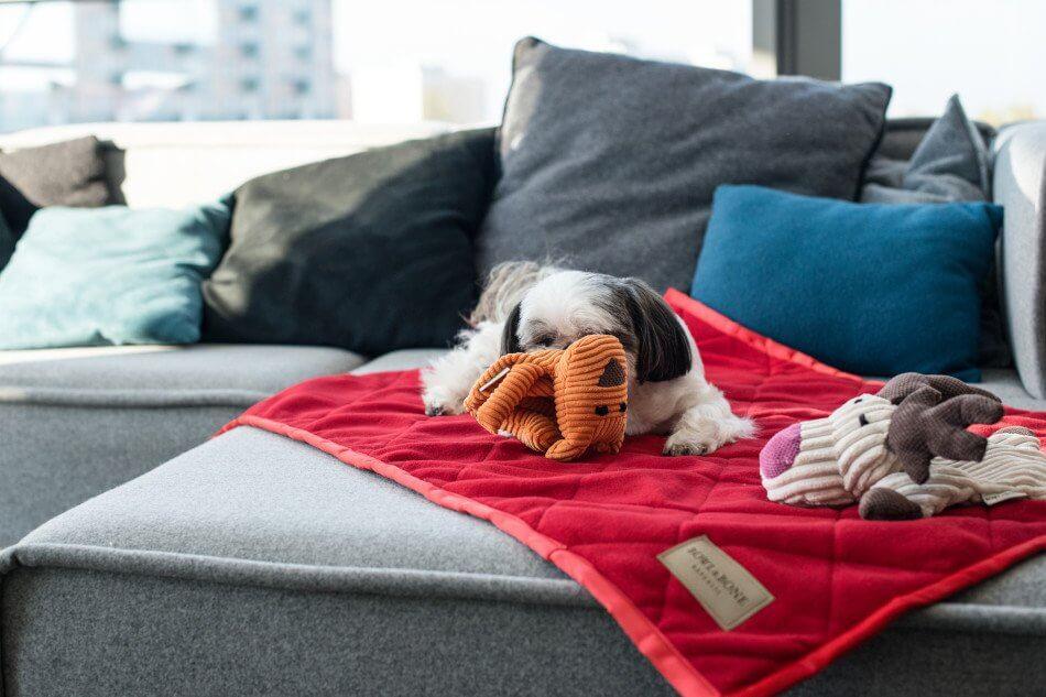 dog toy felix toffi blanket royal red blue bowlandbonerepublic ls1sa