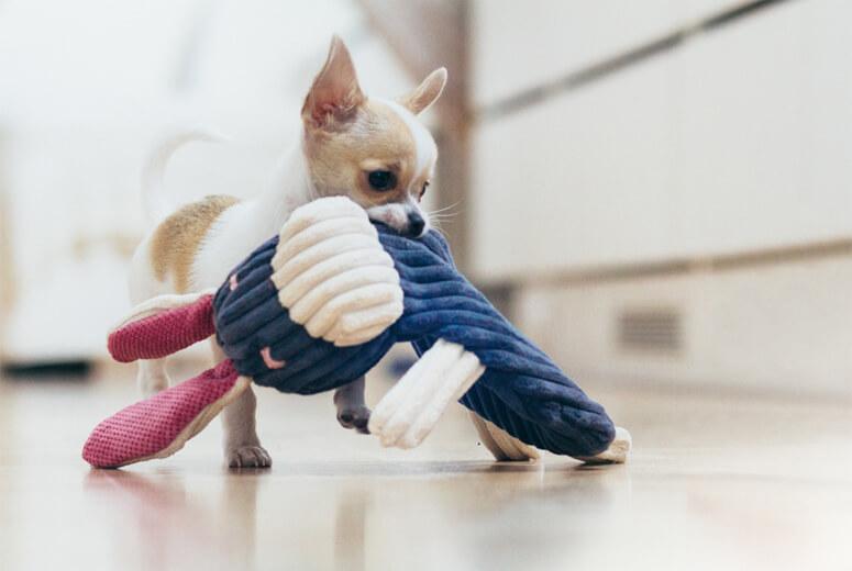 dog toy rex bowlandbonerepublic ls1sa
