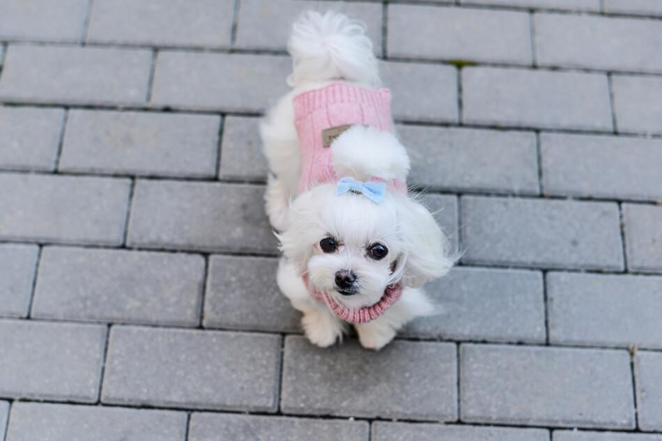 dog sweater aspen pink bowl and bone republic ls2sa