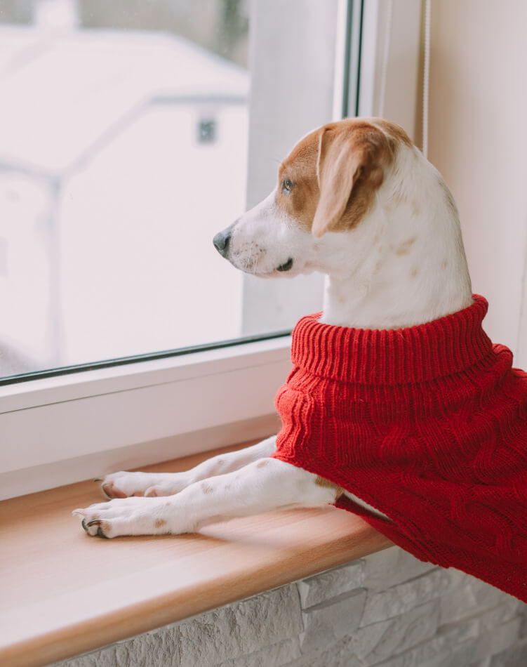 dog sweater aspen red bowl and bone republic ls1sa