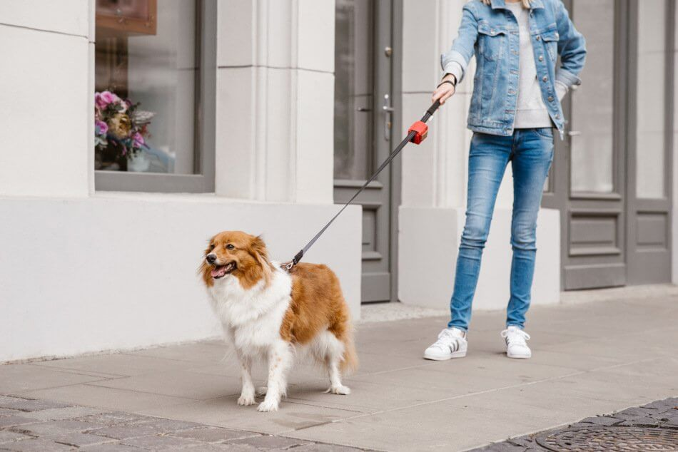 dog waste bag holder mini red bowlandbonerepublic ls1sa