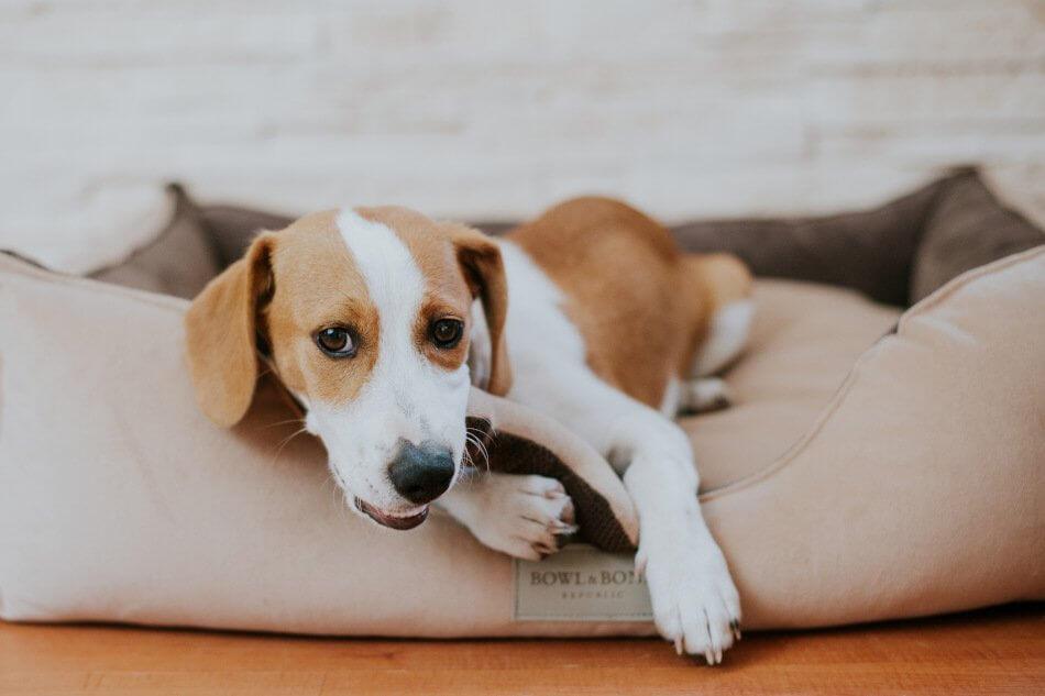 dog bed classic brown bowlandbonerepublic ls1sa