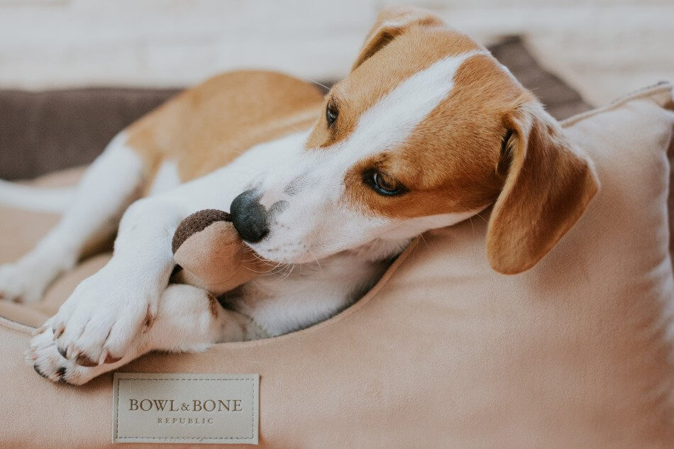 dog bed classic brown bowl and bone republic ls2sa