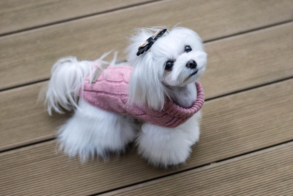 dog sweater aspen pink bowlandbonerepublic ls3sa