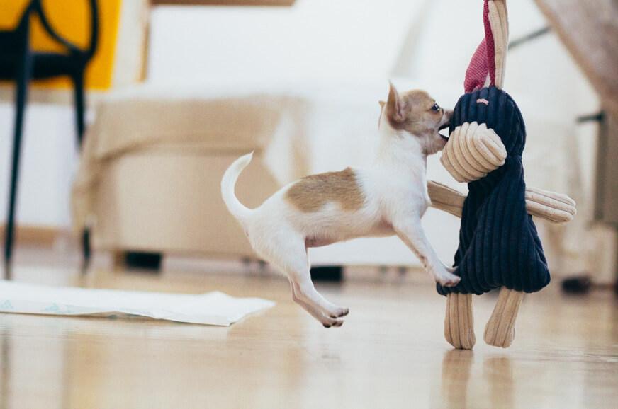 work pet sitter