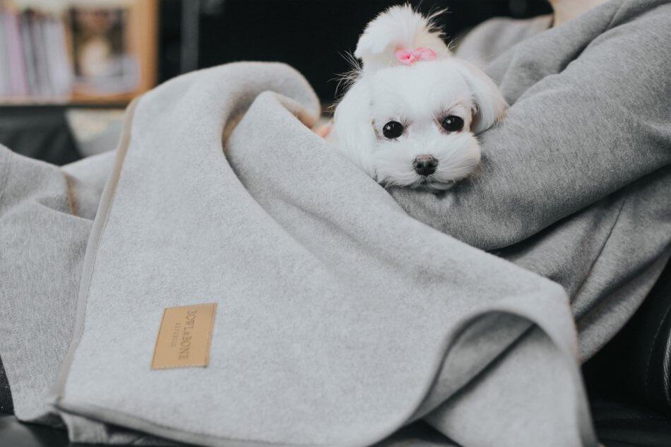 dog blanket zen grey bowl and bone republic ls1sa blog