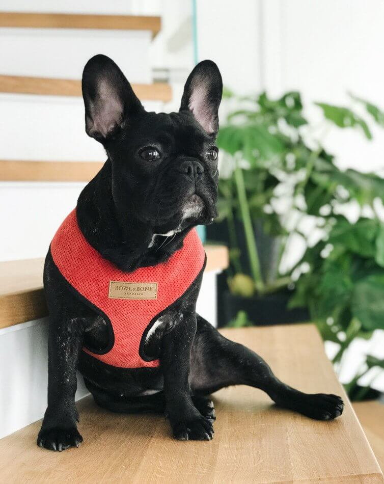 dog harness candy red bowl and bone republic