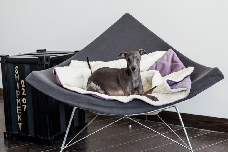 dog bed dreamy lily bowl and bone republic ls1sa blog