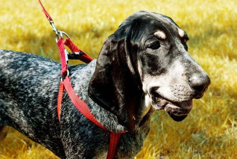 dog harness lead active red bowl and bone republic ls3sa