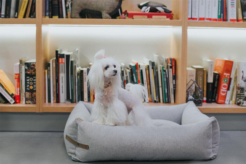 dog bed loft grey bowl and bone republic ls3sa blog