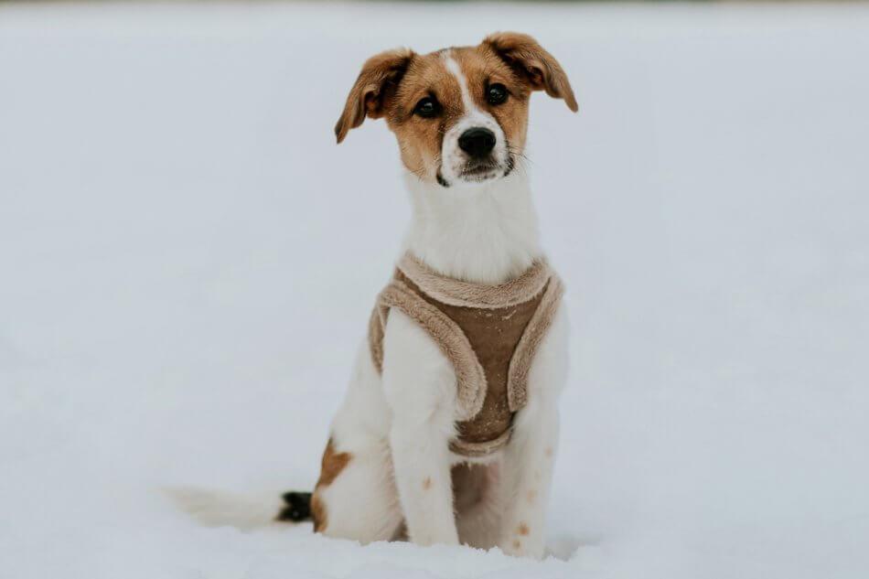 dog harness yeti brown bowl and bone republic ls1sa