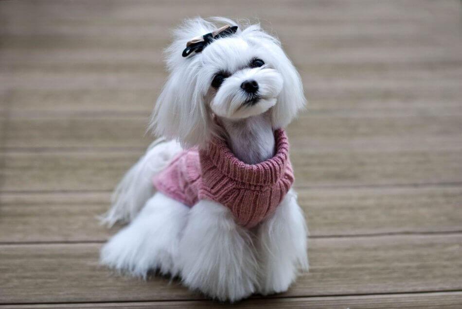 dog sweater aspen pink bowl and bone republic ls6sa