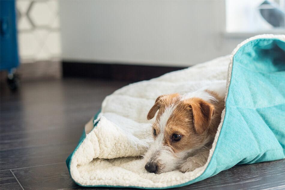 dog bed dreamy mint bowl and bone republic ls2sa