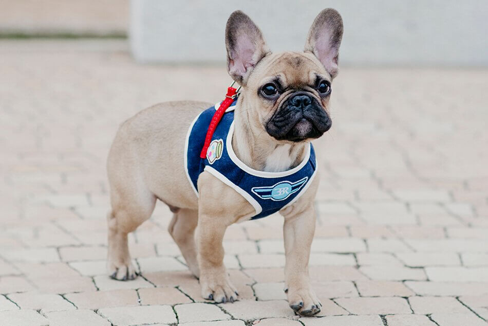 dog harness denim navy bowl and bone republic ls2sa