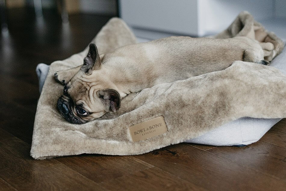dog blanket nap brown bed loft grey bowl and bone republic ls3sa