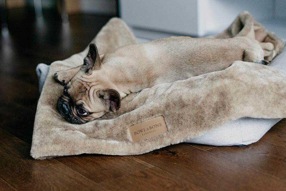 dog blanket nap brown bed loft grey bowl and bone republic ls3sa