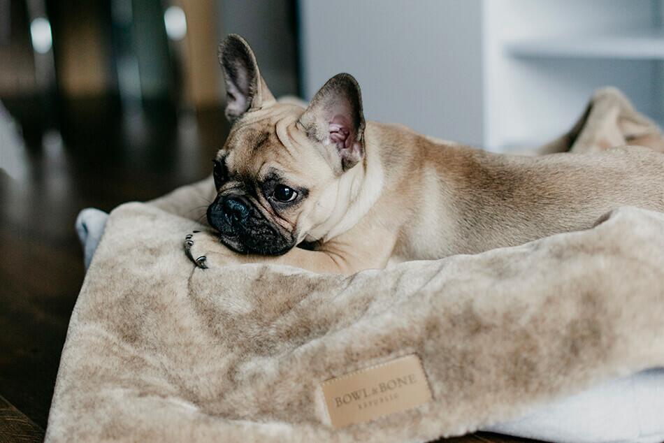 dog blanket nap brown bed loft grey bowlandbonerepublic ls8sa