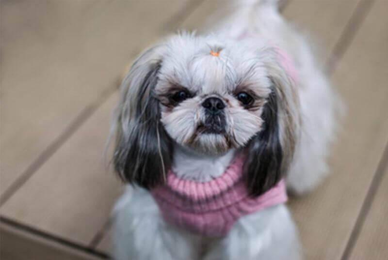 dog sweater aspen pink bowl and bone republic ls6sa blog