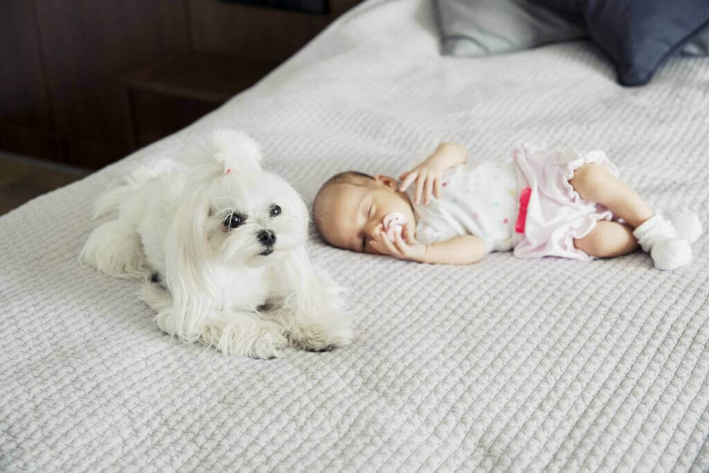 newborn baby with maltese dog bowl and bone republic ls1sa blog