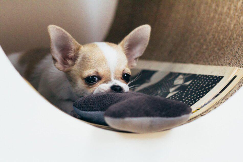 dog bed classic grey bowl and bone republic ls3sa blog