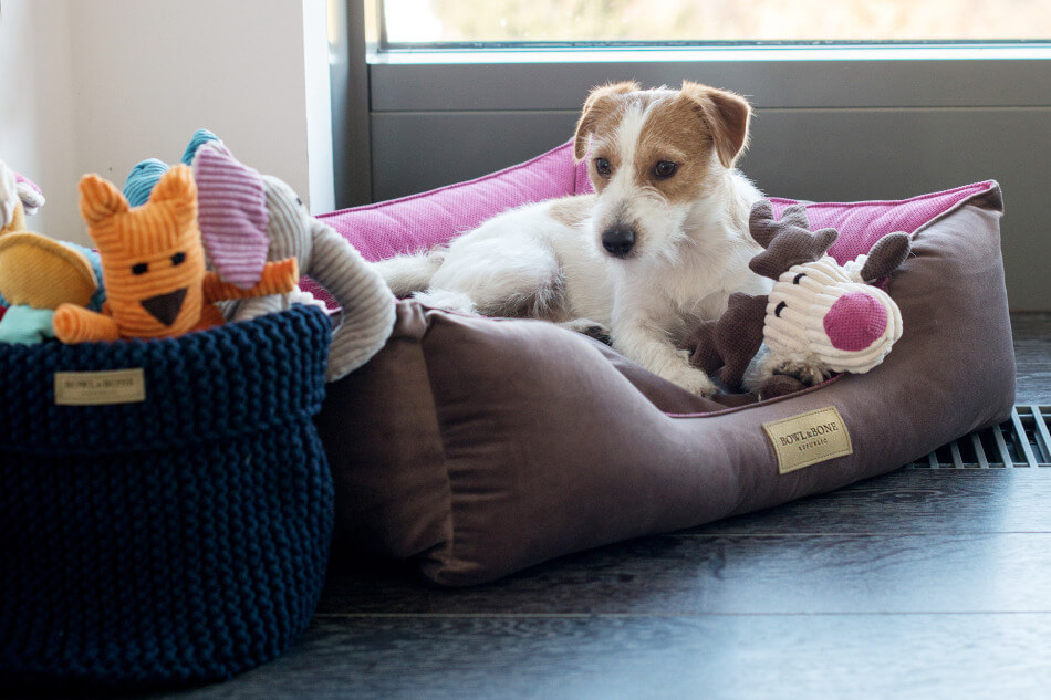 dog bed classic pink basket for toys cotton navy toy toffi dumbo felix bowl and bone republic ls1sa blog