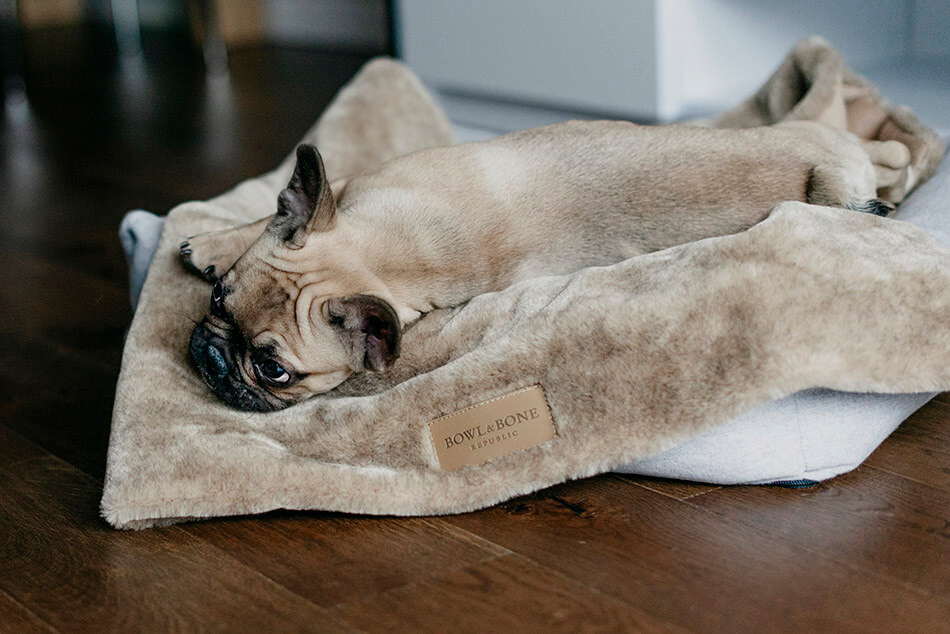 dog blanket nap brown bed loft grey bowl and bone republic ls1sa blog