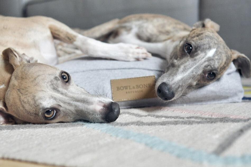 dog cushion bed loft grey bowl and bone republic blog